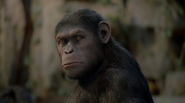Rise of the Planet of the Apes (2011), Dawn of the Planet of the Apes (2014)  Caesar10