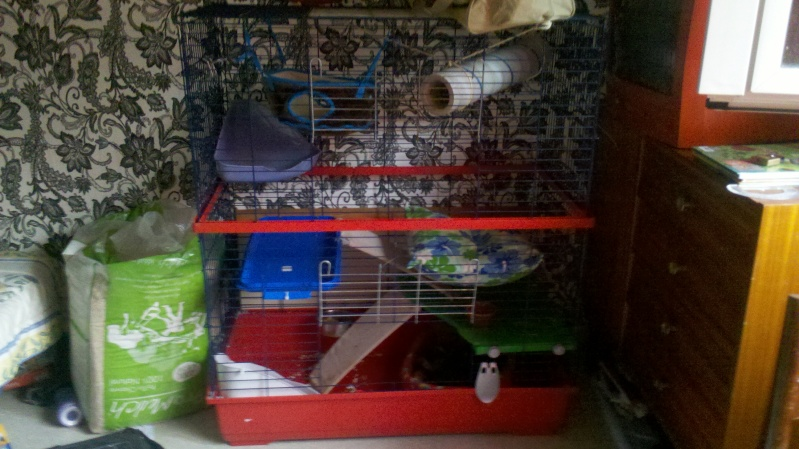 Vend cage IMAC double  2011-012