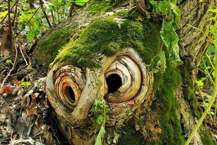 bizarrerie de la nature 15277942