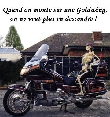Goldwing  comique ou pas 29473010