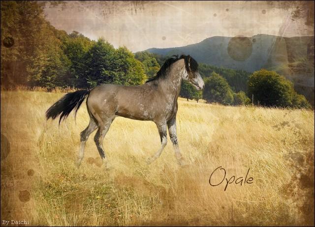 Opale Opale10