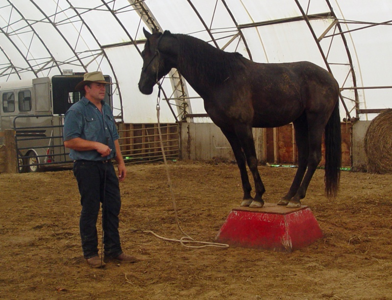 Do you have a horse that won't load on a trailer?  You could win $200 Cash Dsc03711