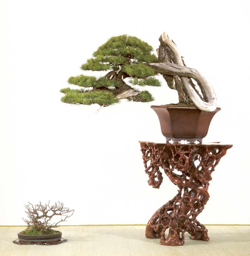 Knot pine style - Page 2 71010