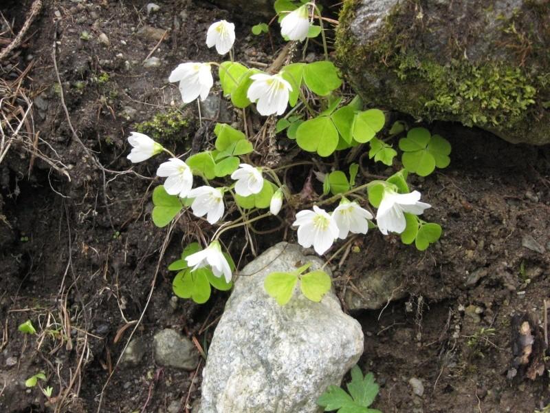 Flore du massif - Page 2 03610