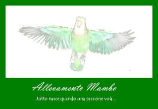 le mie nueve cocorite - Page 2 Mambo12