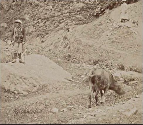 1936 - 1939 :Manoeuvres en Provence et dans les Alpes. - Page 3 649_0010
