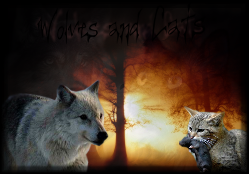 Wolves and Cats