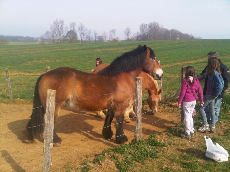 Nenette du Pin - Ardennaise de 11 ans  - dpt 67 Img00212