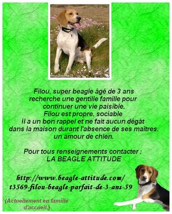 FILOU, beagle de 3 ans (59) en FA chez Fabou [Adopté] - Page 3 Affich10
