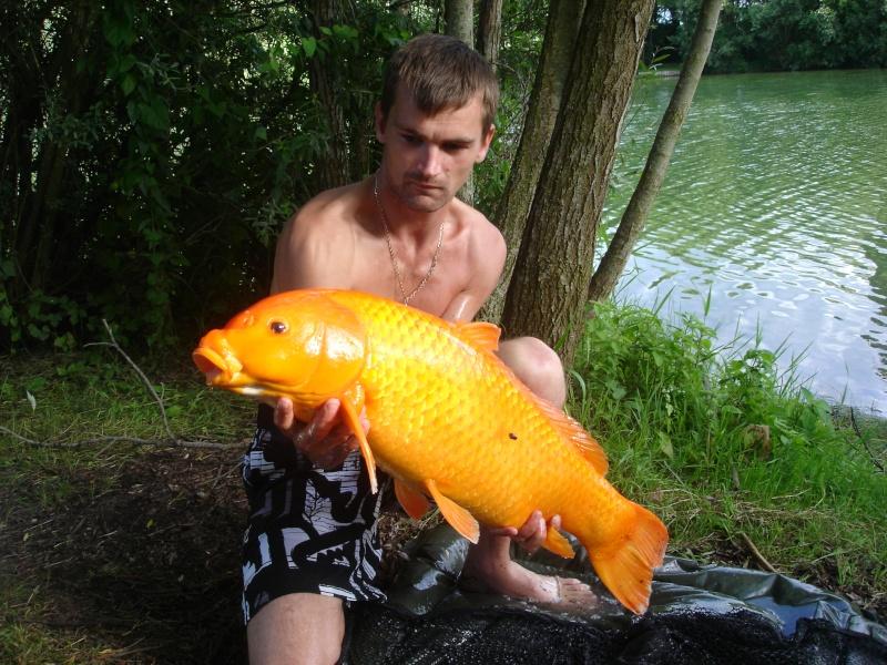 Quelle poisson vous a marquez le plus durant cette année 2011 ? Dsc00566