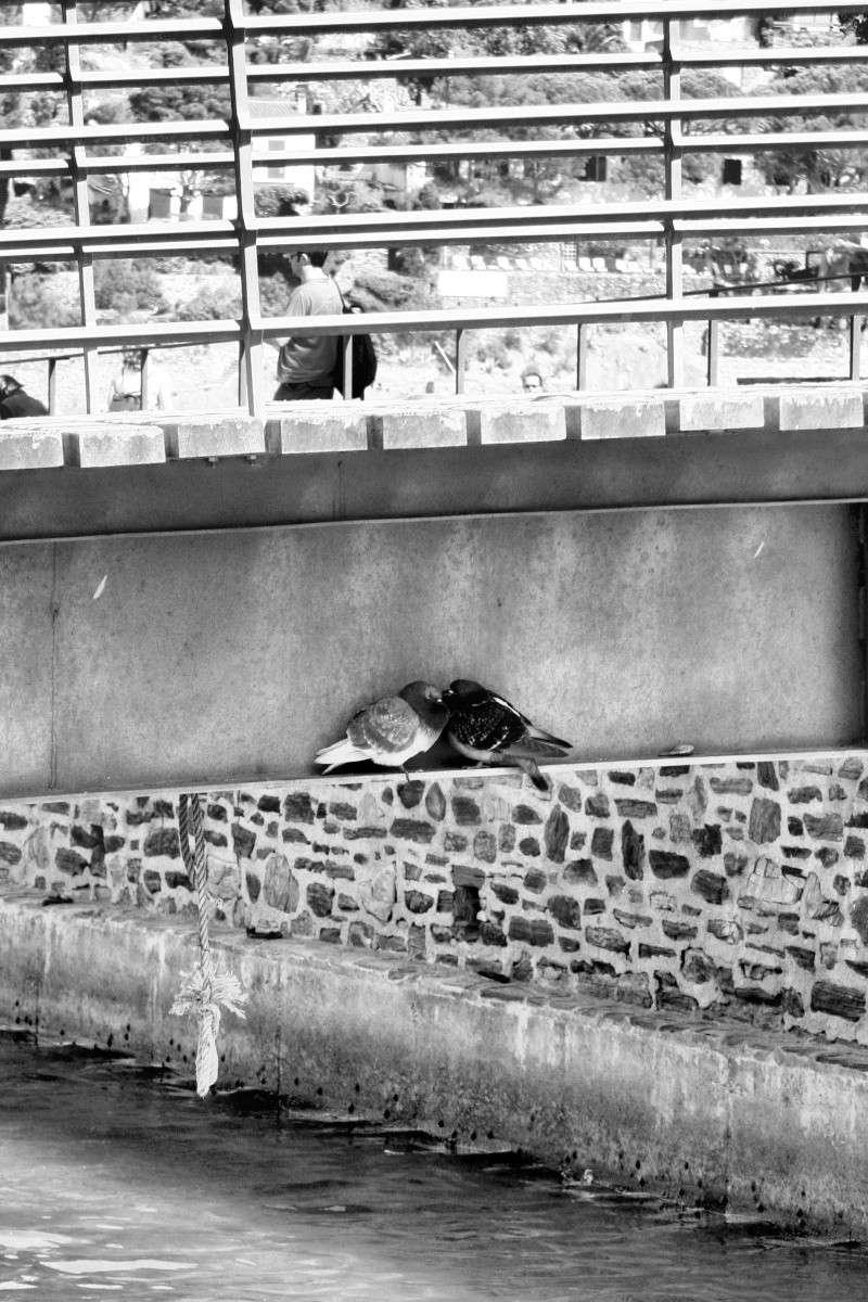 Collioure Img_6910