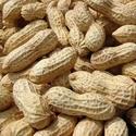 L'arachide 2382_d10