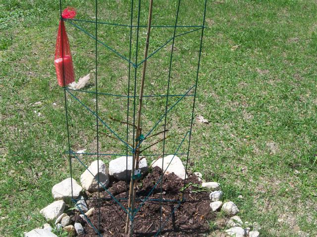 Thinking of adding fruit trees this year.... 05-08-11