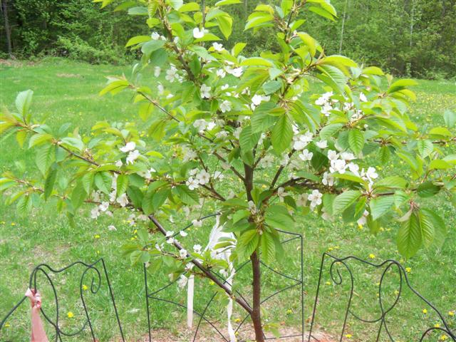 Thinking of adding fruit trees this year.... 05-14-13