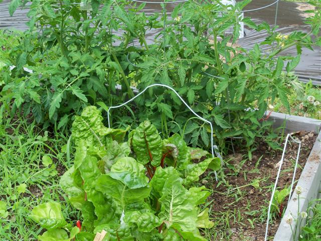 Square foot placement for some other vegetables 06-12-11