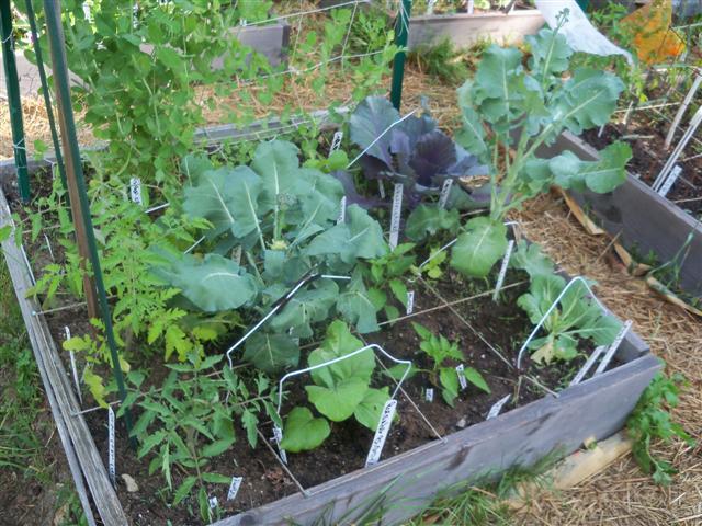 Garden Plan Help, Please! 06-17-14