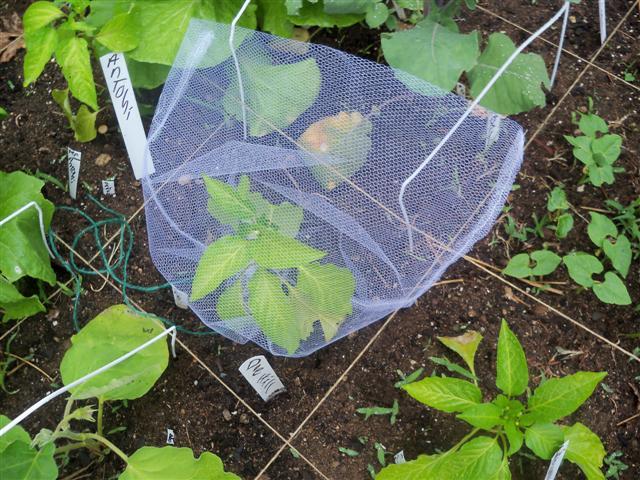 Seed saving 06-22-11