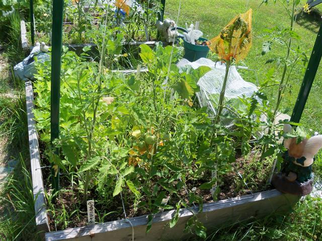 Tomato Depth Experiment.... 07-02-12