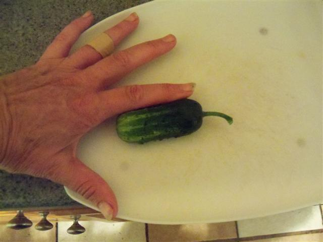 My first cucumber.... 07-23-10