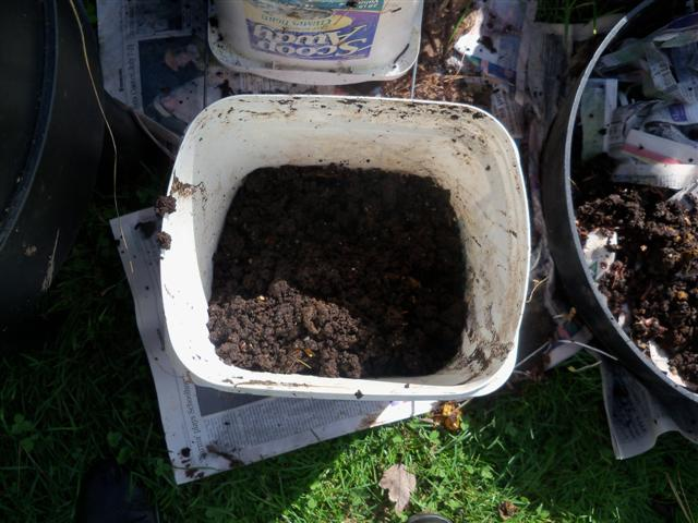 I havested my fall worm compost today! 10-21-12