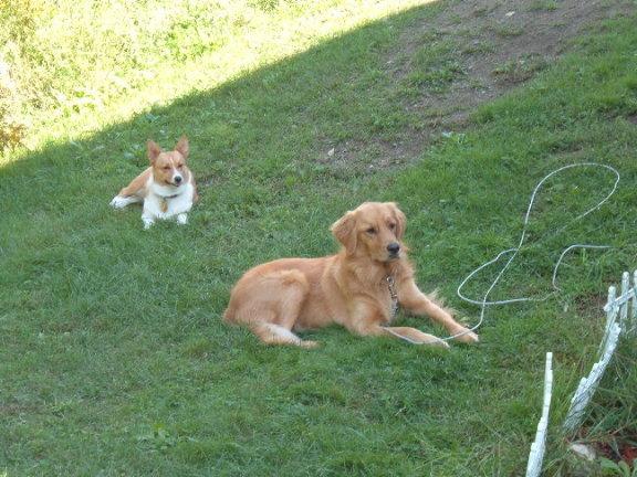 Katie the dog.. Daisy_10