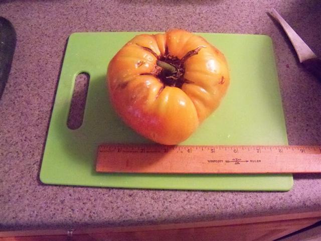 Dixie's sweet tomatoes Dixie_10