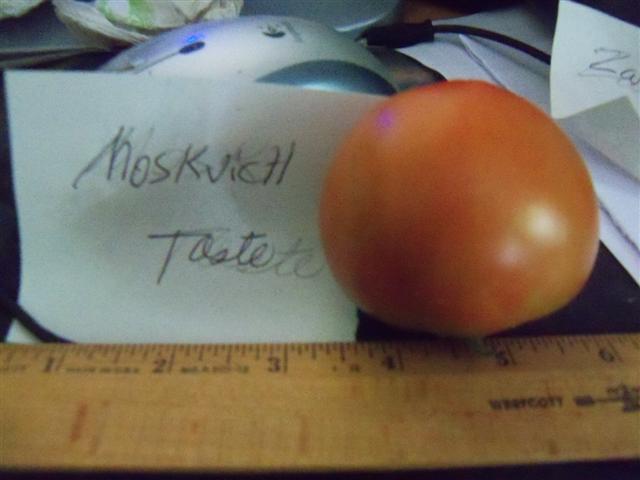 Favorite Tomato Varieties? Moskvi12