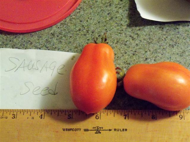Favorite Tomato Varieties? Sausag11