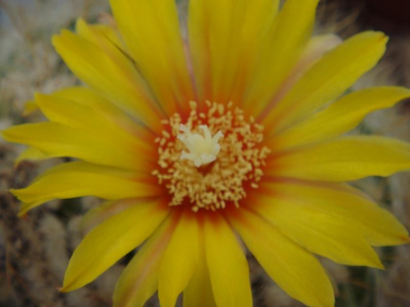 Fleur 2011 Suite ... 14/08/2011 Dsc00715