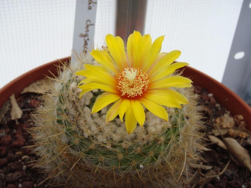 Fleur 2011 Suite ... 14/08/2011 Dsc00716