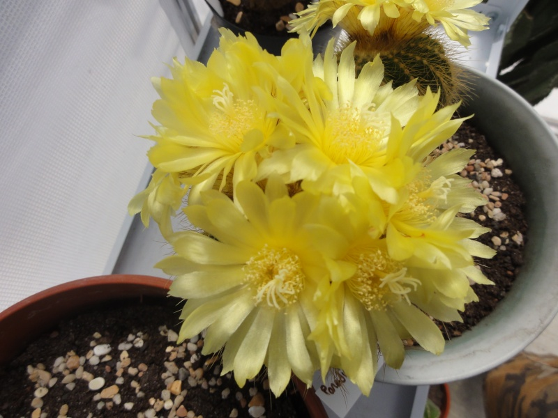 Fleur 2011 Suite ... 14/08/2011 Dsc00720