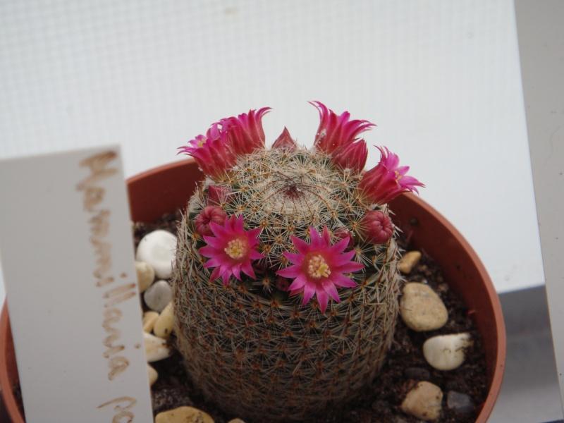 Fleur 2011 Suite ... 14/08/2011 Dsc00810