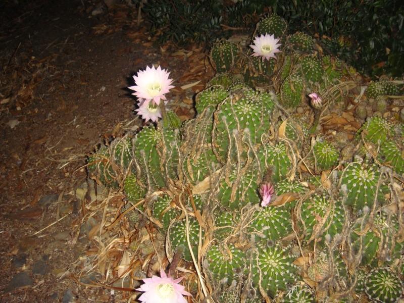 Fleur 2011 Suite ... 14/08/2011 Dsc01111
