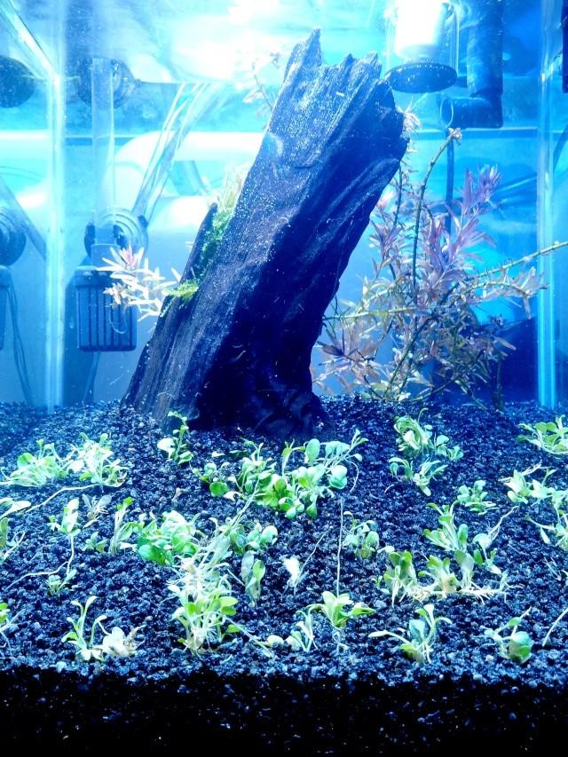 """Nano 20 litres """"such as a jungle"""" 20121110"""
