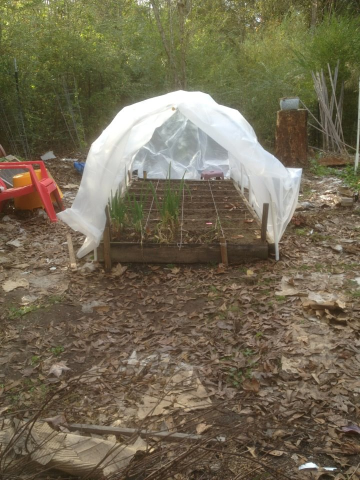 Square Foot Greenhouse Gardeners, Check In, Please! Hoop_h11