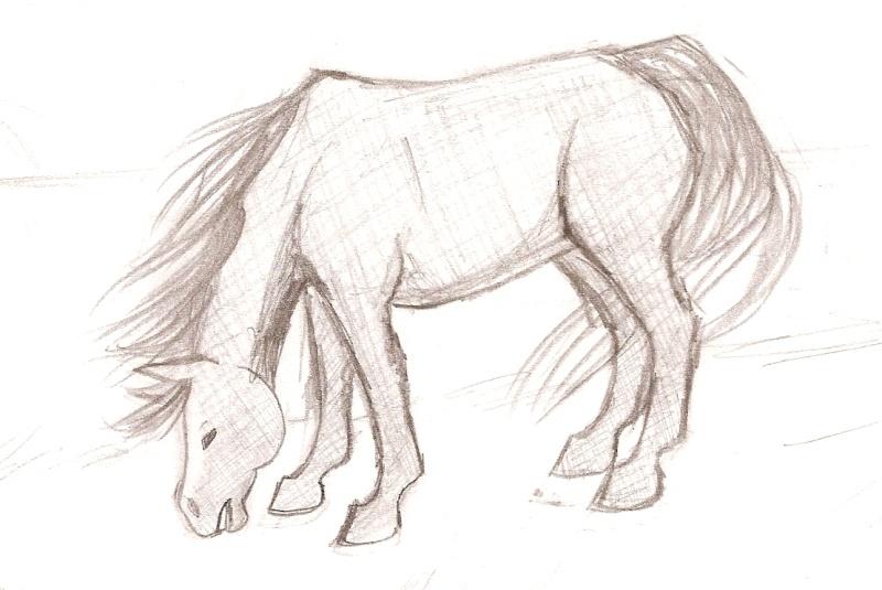 alors c'st vraiment crayonné... (cheval broutant) [noony4] Numari14