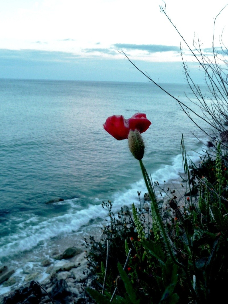 Gargano et Sicile, printemps 2011 (partie II) Coquel10