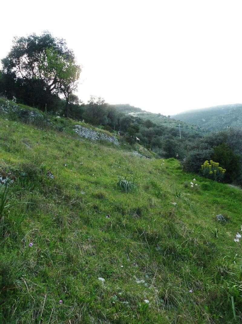 Gargano et Sicile, printemps 2011 (partie II) P1000218