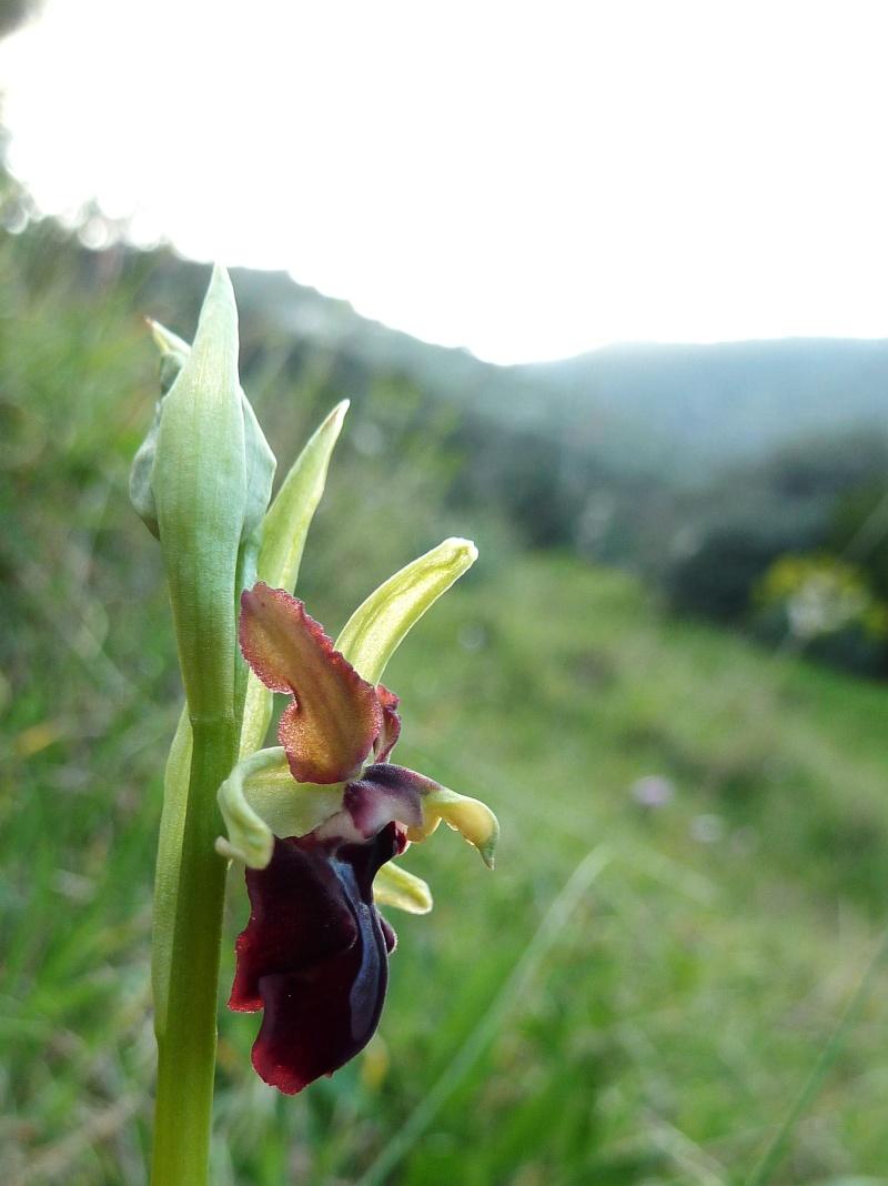 Gargano et Sicile, printemps 2011 (partie II) P1000221