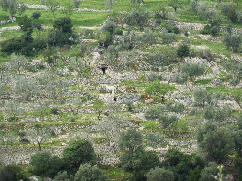Gargano et Sicile, printemps 2011 (partie II) P1000310