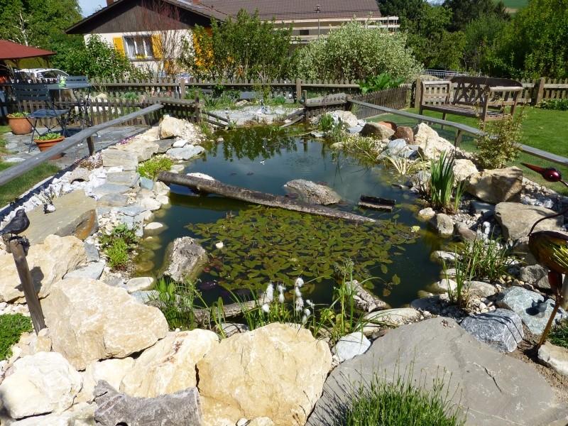 Projet de réalisation d'un bassin pour cistudes - Page 11 P1010012