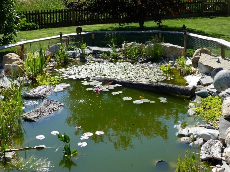 Projet de réalisation d'un bassin pour cistudes - Page 12 P1010025