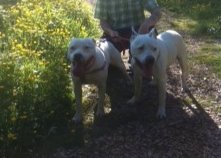 GEORGE (DEAF) has a Forever home staying for good at foster home George10