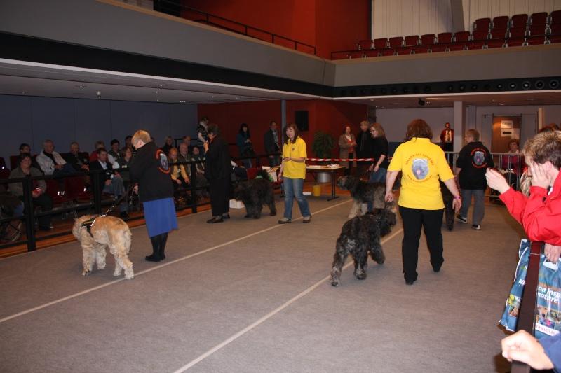 Bouvierhilfe Präsentation 2011 Oldenburg 19-20.November 2011 Img_5814