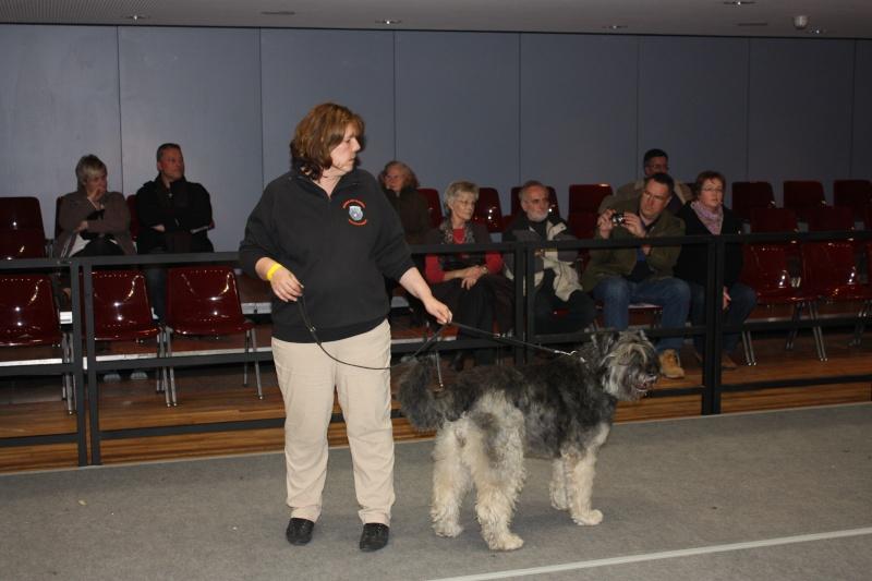 Bouvierhilfe Präsentation 2011 Oldenburg 19-20.November 2011 Img_6013