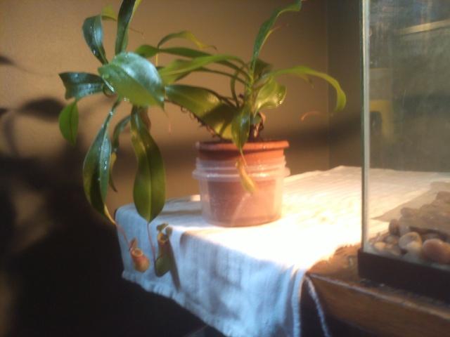 présentation de plante + question P1107119