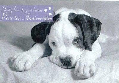Joyeux anniversaire aux 4 pattes d'avril 2012  Chiene10