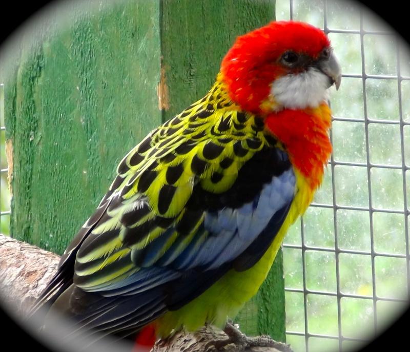 forum d'oiseaux !fleur Dsc00316