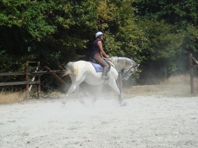 Un cheval sur la main Dsc06511