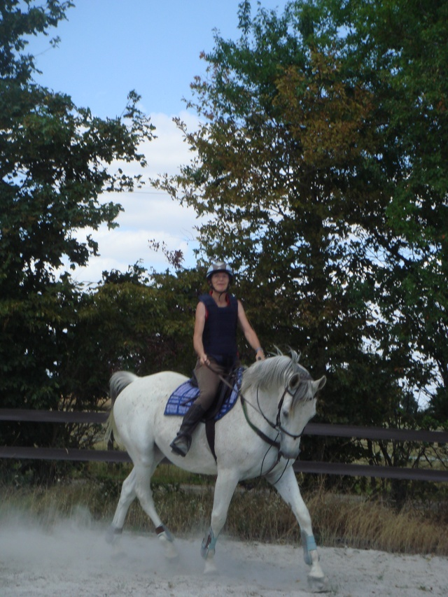 Un cheval sur la main Dsc06512